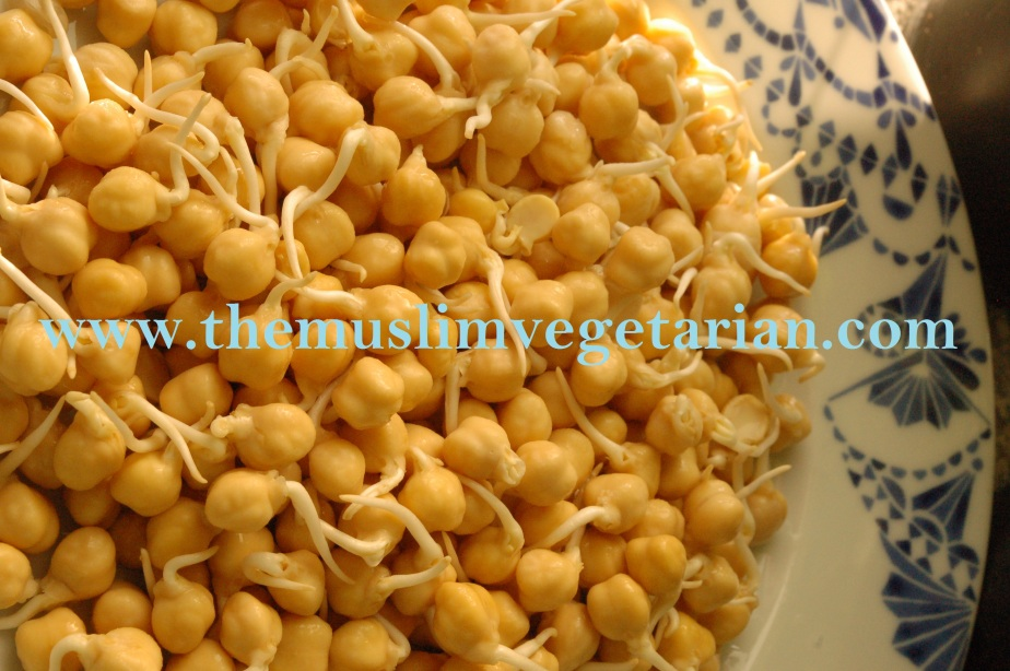 Sprouted Chick Peas Perfect for Salad or Raw Humous