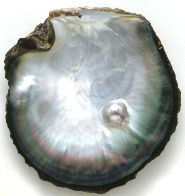 pearl-in-shell