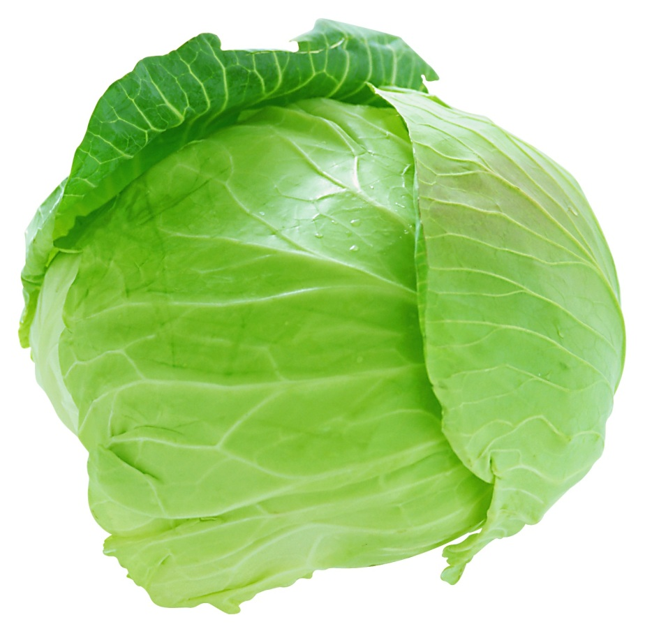 cabbage_png8803