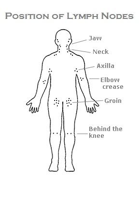 lymph-nodes
